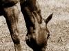 Grazing horse, Owl Creek Pass
